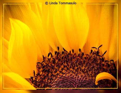 eoy-color-aa2_tommasulo_linda-a