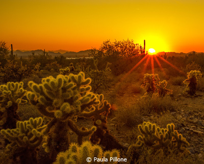 EOY-Color-B_Pillone_Paula_Cholla-At-Sunset_Third-Place