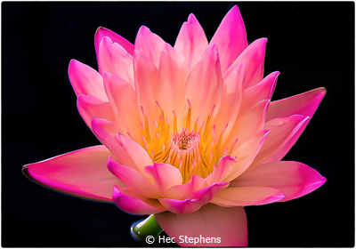 EOY-Color-B_Stephens_Hec_Water-Lilly-at-Botanical-Gardens_Second-Place