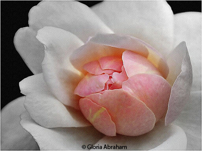 april_color_b_abraham_gloria_poppong_pink