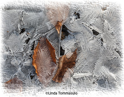 april-theme-ice_tommasulo_linda-a