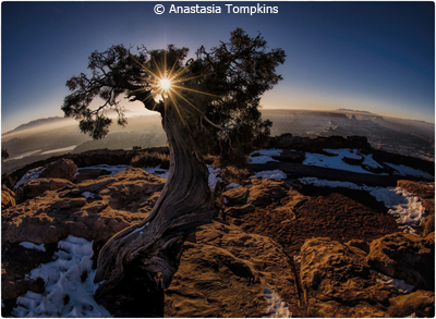 april-color-aa_tompkins_anastasia_sunrise-at-horseshoe-bend-utah