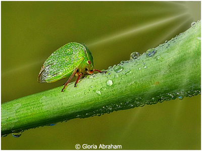 December Color Group A_Gloria Abraham_Little Green Bug_Image of the Month