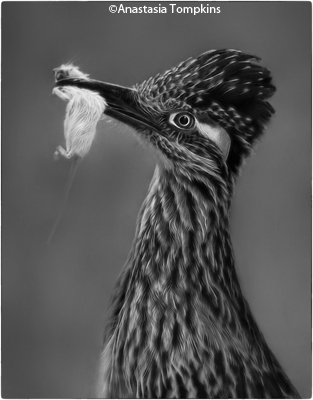 december-bw_tompkins_anastasia_roadrunner-with-dinner