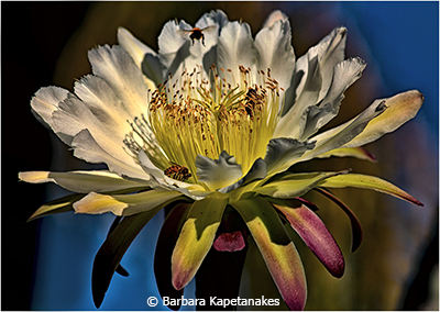 Barbara_Kapetanakes_Flower and Bees_Honorable Mention_Febraury Color Group B_20180203
