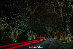 Paula_Pillone_Into the Night_Honorable Mention_February Theme Leading Lines_20180203
