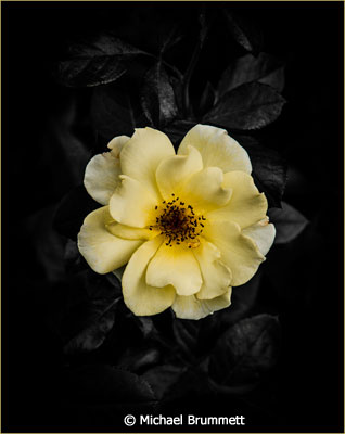 febraury-color-b_michael-brummett_yellow-flower