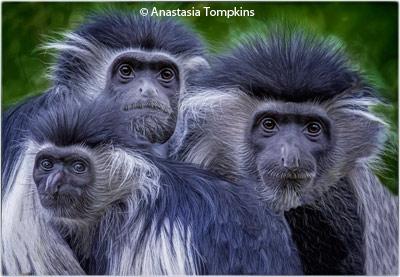 february-1-group-aa_tompkins_anastasia_three-amigos