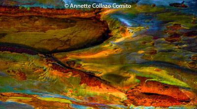 february-1-group-b_collazocomito_annette_eucalyptus-rainbow-bark