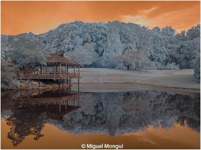 february-color-aa_mongui_miguel_ir-landscape_imagge-of-the-month