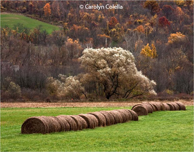 february-2-group-b_colella_carolyn_hay-bales