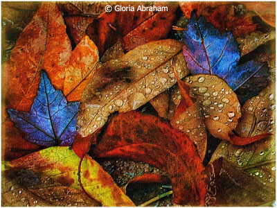 January-Color-Group-A_Abraham_Gloria_Fall-Color