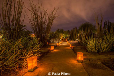 January-Color-Group-B_Pillone_Paula_Luminarias-in-the-Desert