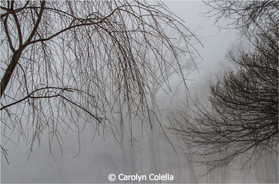 march_color_b_colella_carolyn_fog