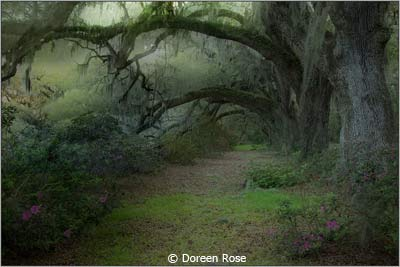 March-Color-Group-AA_Rose_Doreen_Dreamy-Landscape