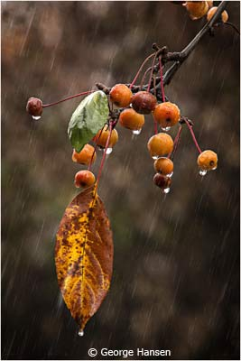March-Theme--Rain_Hansen_George_Soft-Autumn-Rain