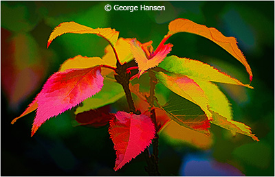 George_Hansen_HyperColor-Leaves_Honorable-Mention_March-Theme-Leaves_20180303