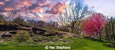 Hec-Stephens_Bronx-Botanical-Gardens_March-B-Group_Bronx-Botanical-Gardens_Image-of-the-Month