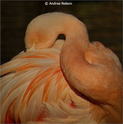 may_color_a_nelson_andrea_flamingo