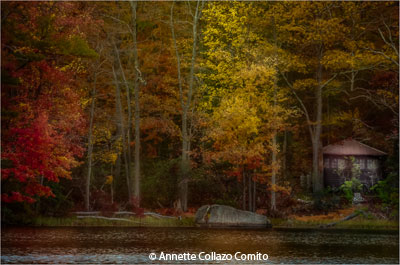 november-color-b_collazocomito_annette_living-color