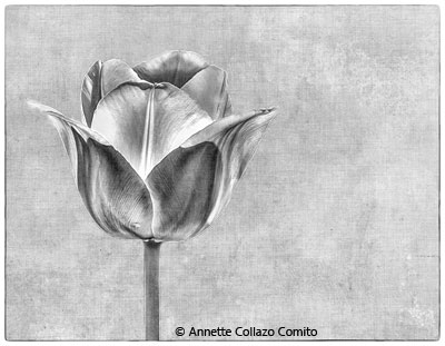 Annette_CollazoComito_White-Perl_Image-of-the-Month_November-Black-and-White_20171104