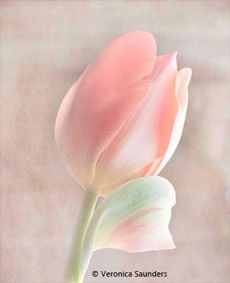 Veronica_Saunders_Pastel-Tulip_Honorable-Mention_November-Color-Group-AA_20171104