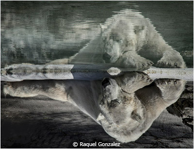 October-Theme-Reflections_Gonzalez_Raquel_Sleeping-Bears