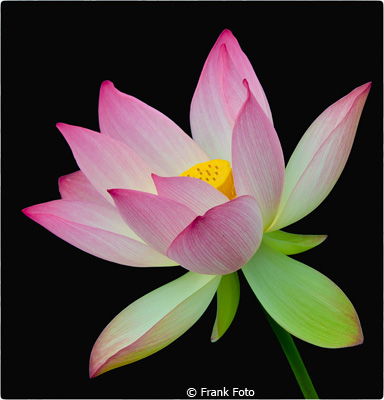 october-color-a_foto_frank_water-lily
