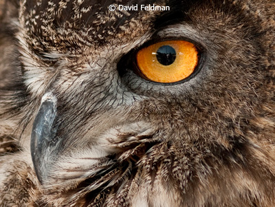 october-color-b_feldman_david_owls-eye