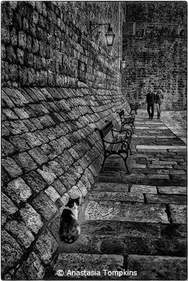 october-black-and-white_tompkins_anastasia_cat-dubrovnik-harbor