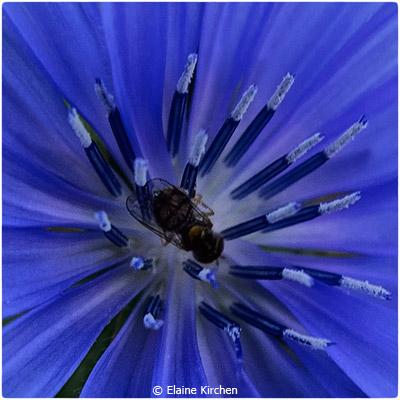september-group-b_kirchen_elaine_fly-on-blue-flower