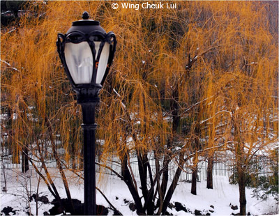 september-theme-street-lamps_lui_wing-cheuk_lamp