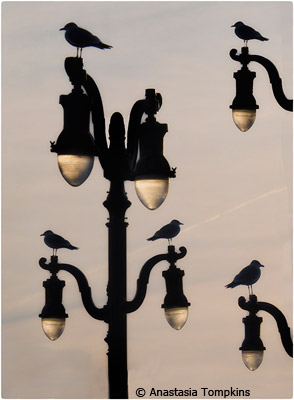 september-theme-street-lamps_tompkins_anastasia_atlantic-city-lamp-post
