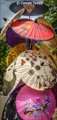 September-Theme--Umbrellas_Tinney_Conrad_Color