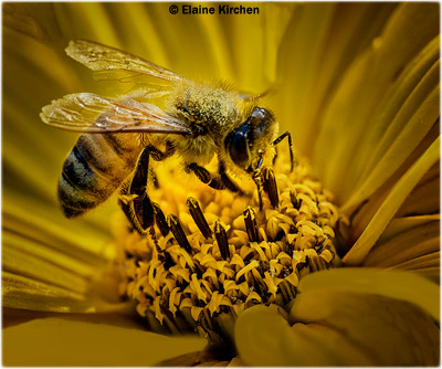 september-color-a_kirchen_elaine_bee