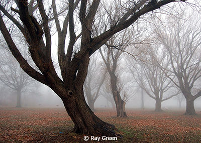 September Color Group B_Green_Ray_Bent Tree in Fog